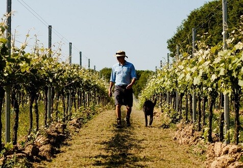 The Rise of English Wine