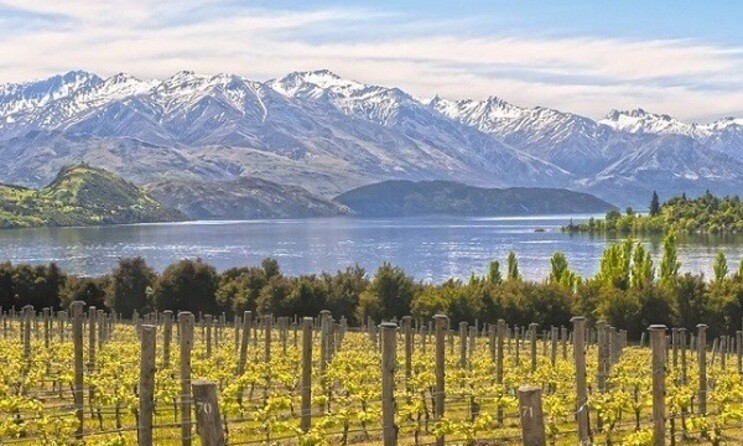 New Zealand: A Bright Future of Wine