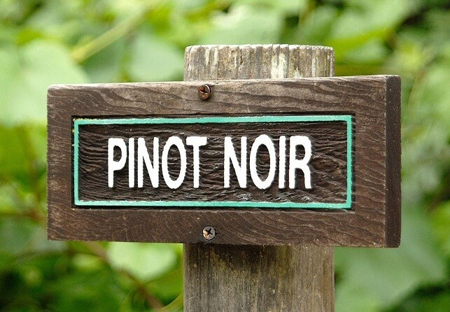 Focus on: Pinot Noir Red Wine