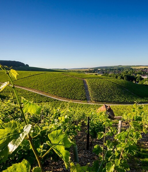 2018 Burgundy En Primeur Our outstanding selection of Burgundy...